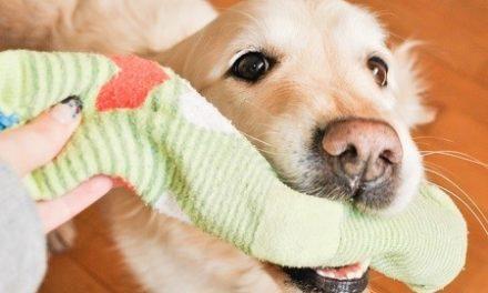 Corpo estraneo gastrico e intestinale nel cane e gatto!