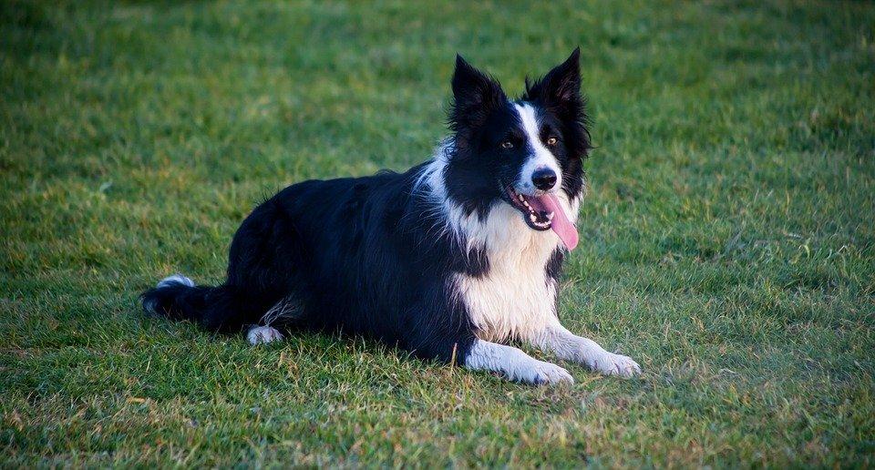crisi epilettica nel cane