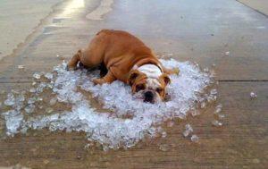 ghiaccio contro il colpo di calore