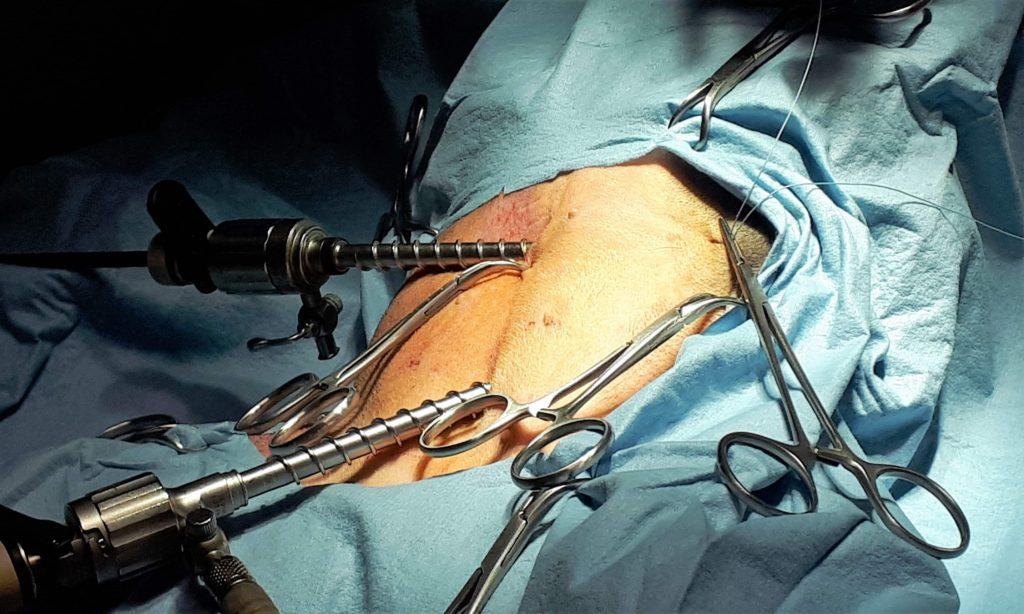 sterilizzazione nel cane femmina