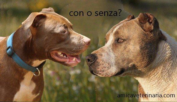 Taglio orecchie e coda nel cane: illegale e dolorosa!