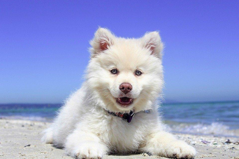 leishmaniosi nel cane