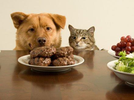 alimentazione per il cane