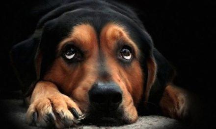 Piometra nel cane: sintomi e intervento.