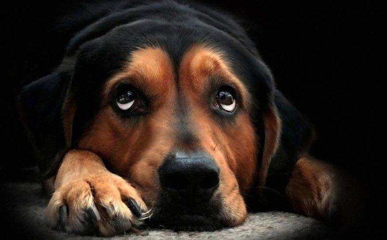 Piometra nel cane e nel gatto, riconoscere i sintomi!