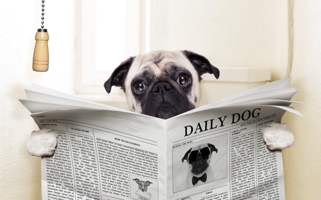 Se il cane o il gatto non urina è un'urgenza!
