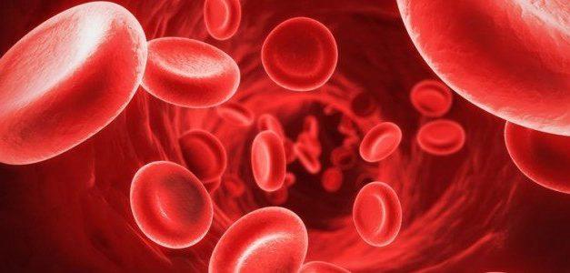 Anemia emolitica immunomediata nel cane: sintomi e terapia.
