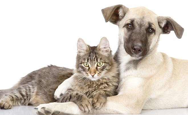 Vaccini nel cane e nel gatto: cosa è cambiato?