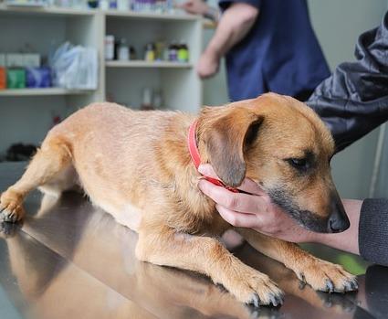 Vaccini nel cane: cosa è cambiato?