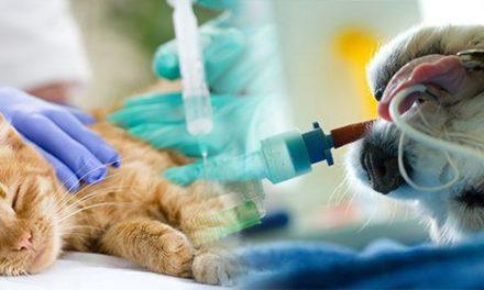 Anestesista veterinario: quello che dovete sapere!