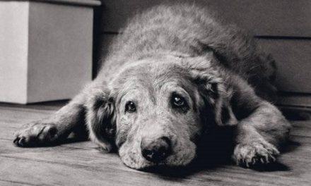 Invecchiamento nel cane e nel gatto: cosa fare per aiutarli?