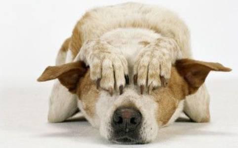 Riflessioni- Diagnosi ad occhio e terapia alla cieca!!!