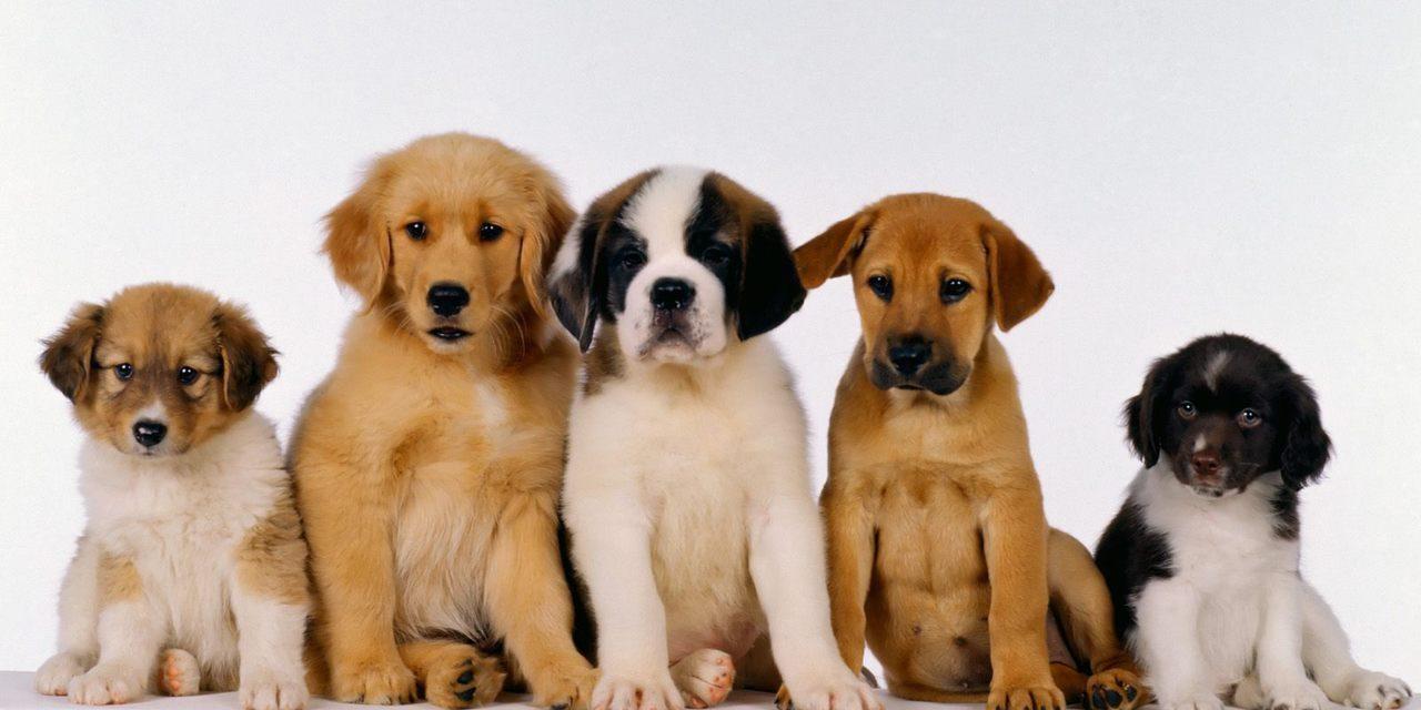 Cucciolo di cane o gatto: una scelta consapevole!