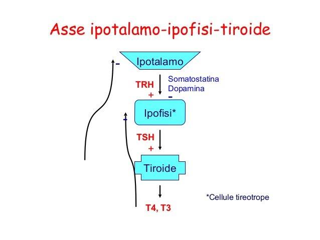 schema dei meccanismi recettoriali dell'ipotiroidismo.