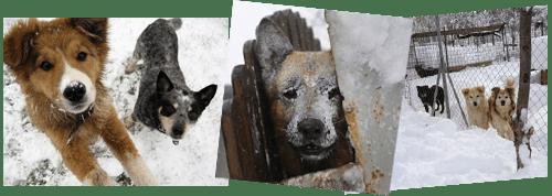 cani a rischio di ipotermia