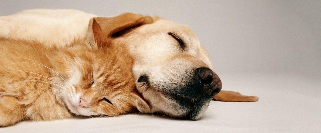 parvovirosi nel cane e nel gatto