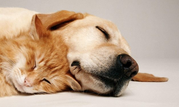 Parvovirosi nel cane: sintomi e sopravvivenza.