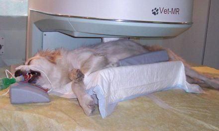 Mielopatia degenerativa nel cane: diagnosi e prognosi.