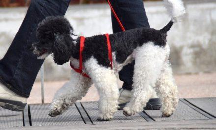 Lussazione rotulea nel cane: sintomi e intervento