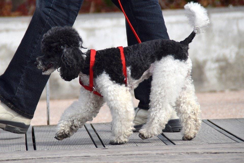 Lussazione Rotulea Nel Cane Diagnosi E Intervento Amica Veterinaria
