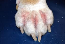 patologie del piede nel cane