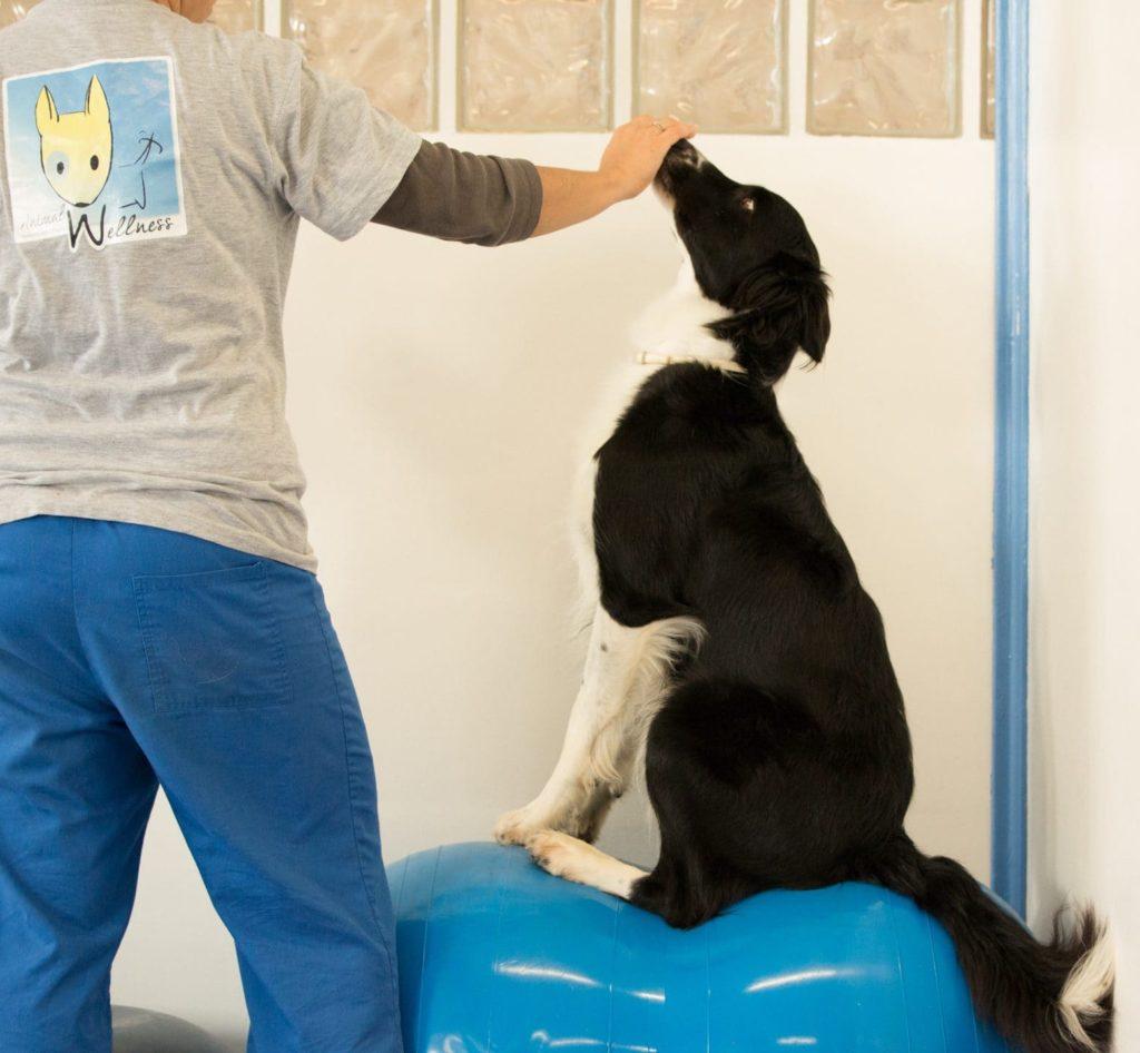 esercizi di canine cross training