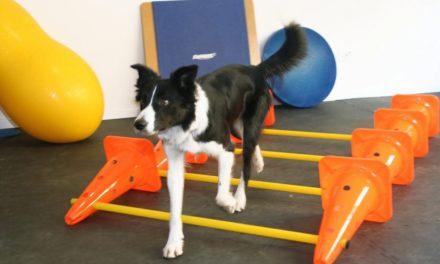 Canine Cross Training! Parla lo specialista!