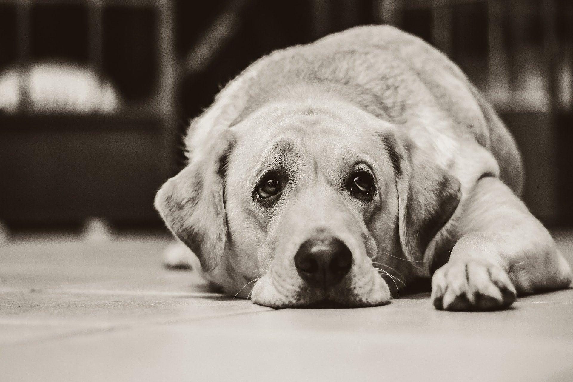 Artrosi e dolori articolari nel cane e nel gatto!
