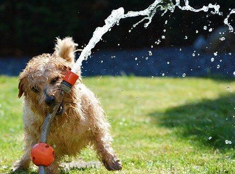 Problemi comportamentali nel cane, a chi rivolgersi?