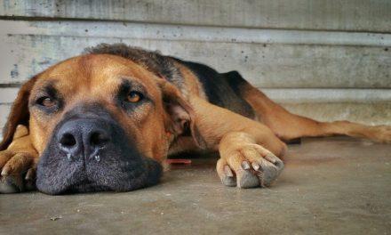 Scolo nasale nel cane e starnuto. Parla lo specialista!
