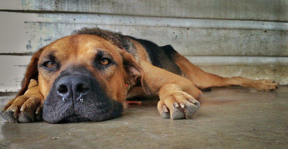 Scolo nasale e starnuto nel cane. Parla lo specialista!