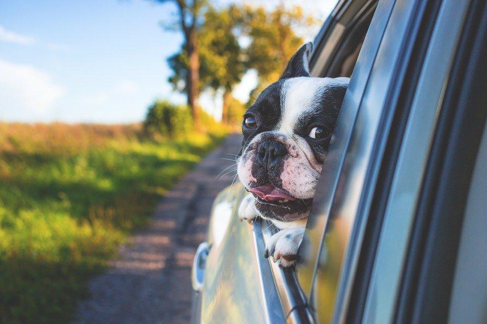 Mal d'auto nel cane