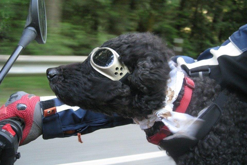 Viaggiare con il cane e il gatto in sicurezza!