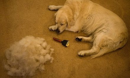 Muta del cane: è normale che perda tanto pelo?