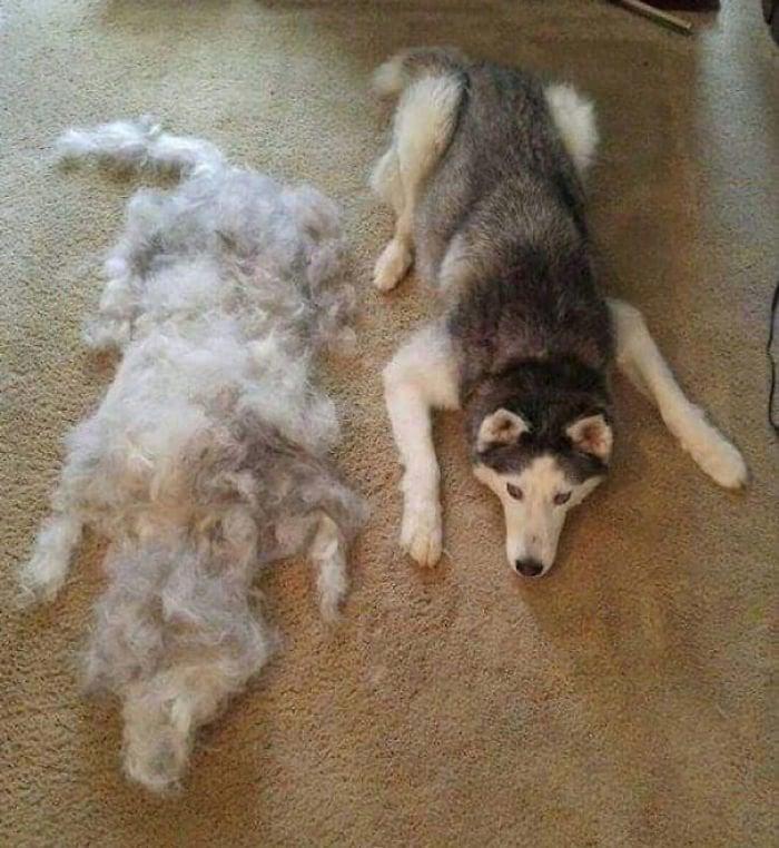 muta del cane