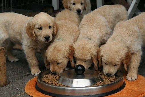 cuccioli che mangiano croccantini