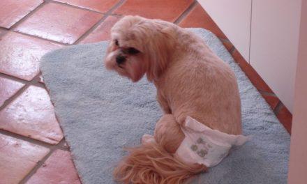 Incontinenza nel cane: quando si fa la pipì addosso!
