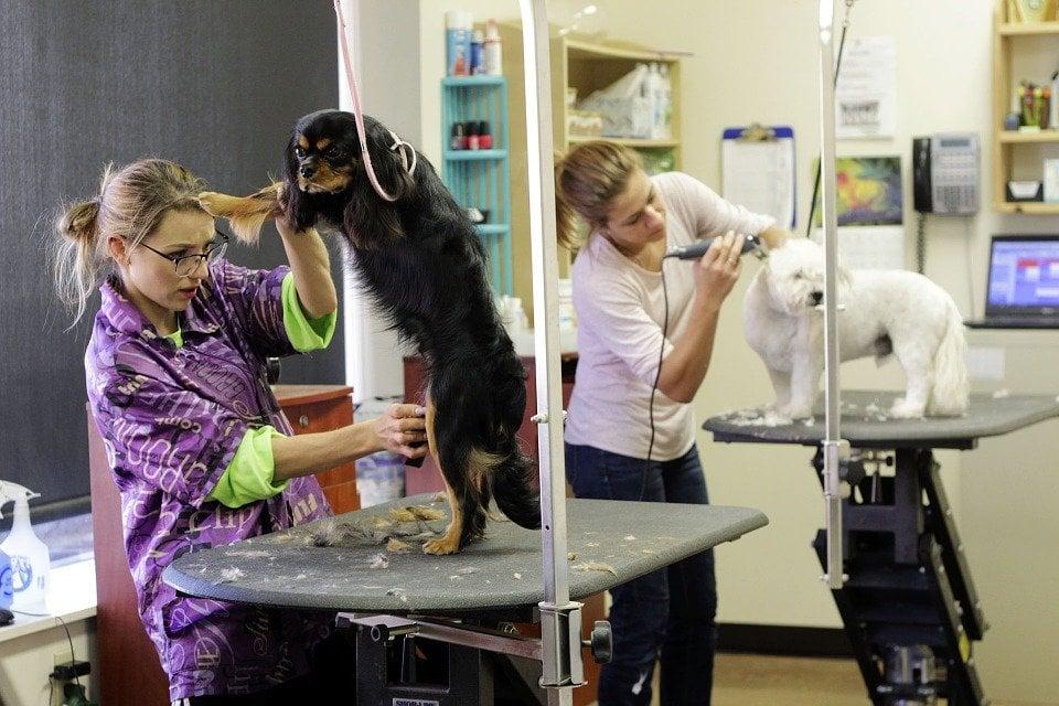 tosare cane con metodo non a zero