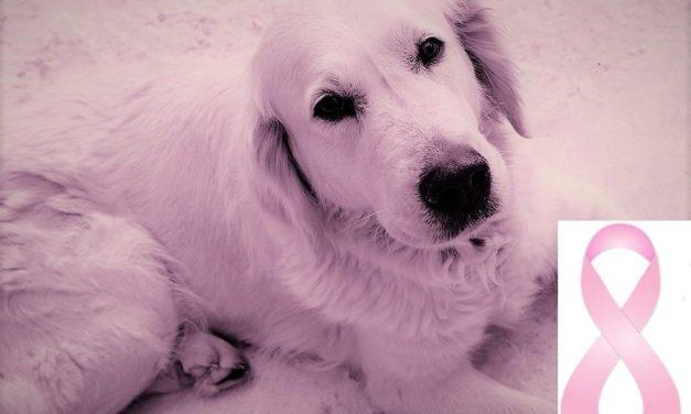 Tumore mammario nel cane: diagnosi e cura.