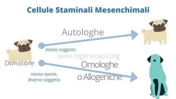 tipi di cellule staminali