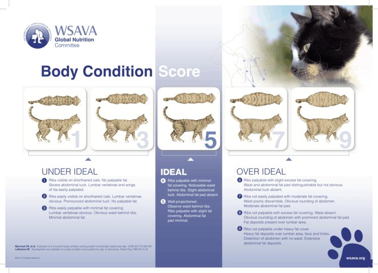 obesità nel cane e nel gatto