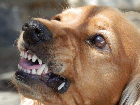 Se il mio cane morde qualcuno? Che succede?