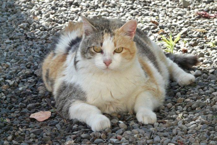 L'obesità nel cane e nel gatto: come si torna indietro?