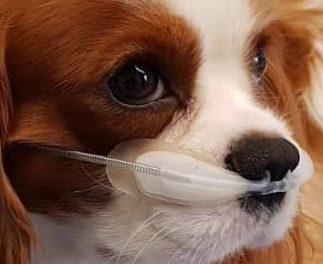Difficoltà respiratoria nel cane e nel gatto!