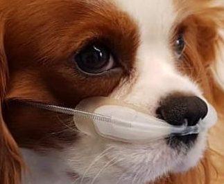 difficoltà respiratoria nel cane