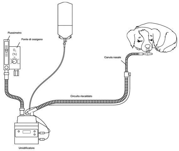 macchina ad alti flussi per paziente in difficoltà respiratoria.