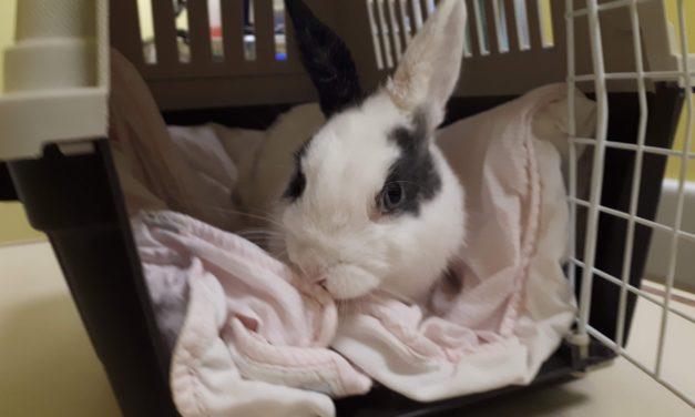 Sterilizzazione della coniglia! Parla lo specialista!