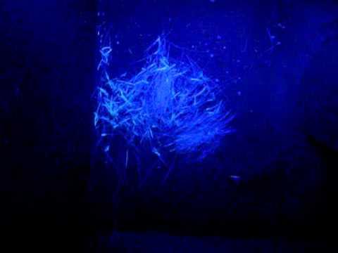 micosi visibile alla Lampada di Wood