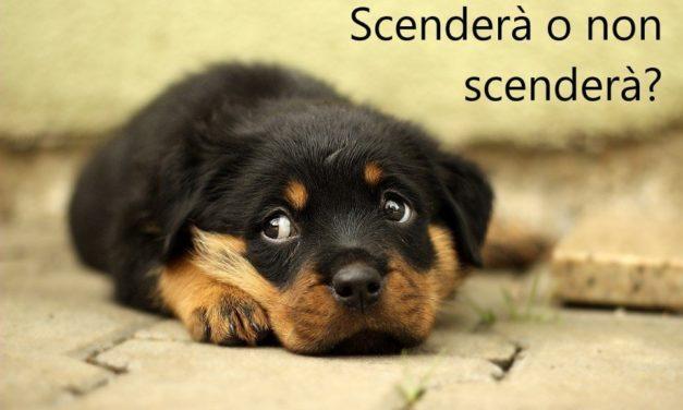 Criptorchidismo nel cane: quando il testicolo non scende!