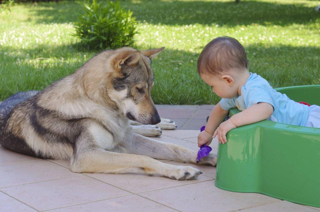 Rapporto cane-bambino